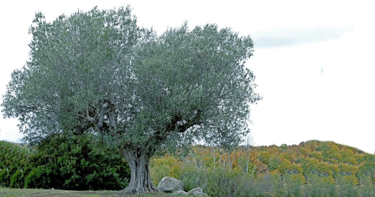 Cerrosughero